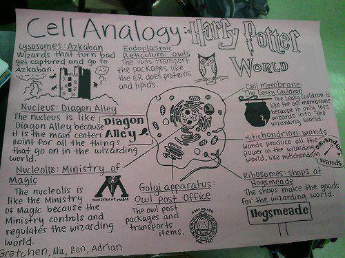 Harry Potter - Cell Analogy