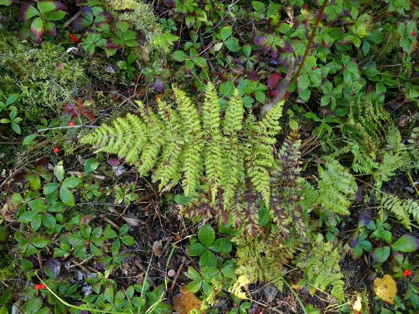Plantes De Sous Bois Liste - Plantes de sous bois par Maverick Pearltrees