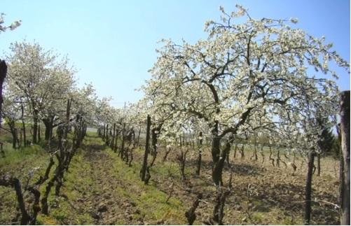 Vigne polyculture2 pearltrees for Jardin foret