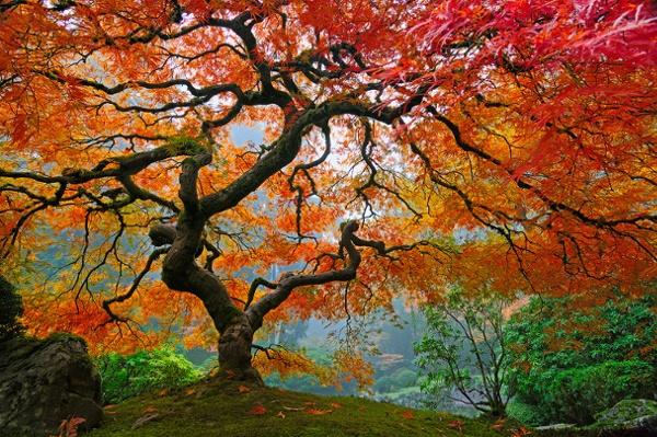 160.jpg from earthshots.org