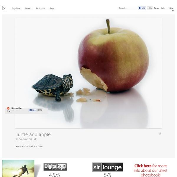 Turtle and apple by Vedran Vidak