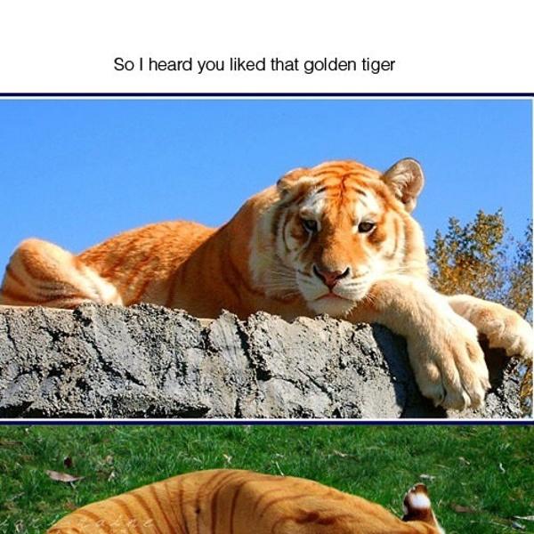 Tiger Coloration