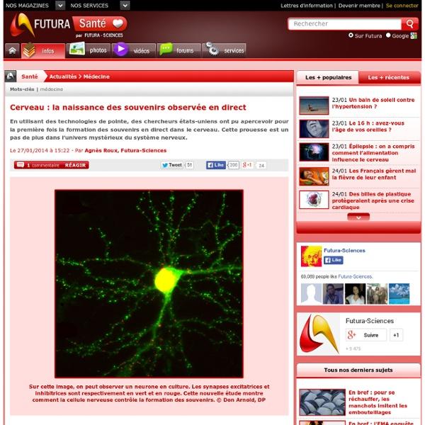 Cerveau : la naissance des souvenirs observée en direct