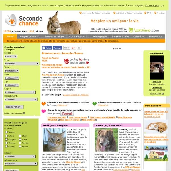 adoption chien adoption chat et adoption tous animaux de compagnie avec seconde chance pearltrees. Black Bedroom Furniture Sets. Home Design Ideas