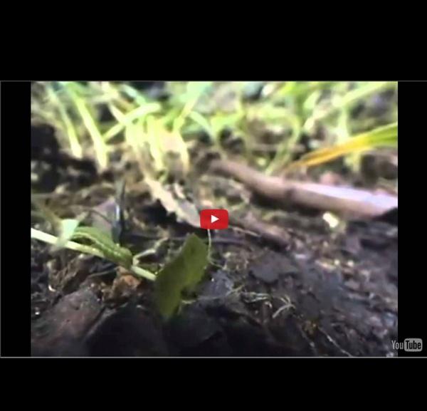 Agriculture de conservation, plus bio que bio