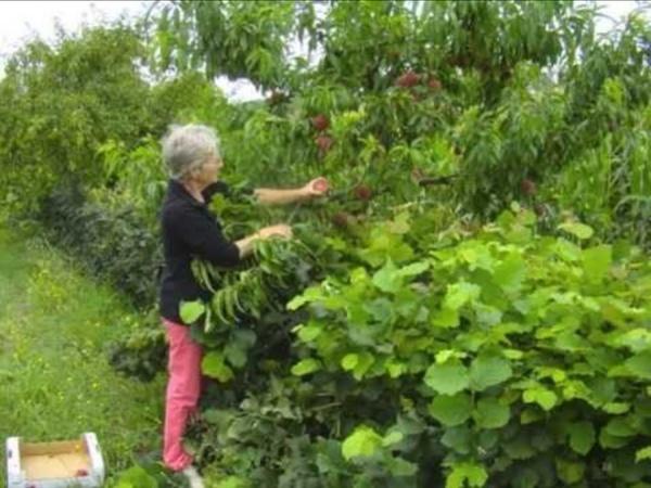 Vers un verger agroforestier ? - Evelyne Leterme, conservatoire végétal d'Aquitaine