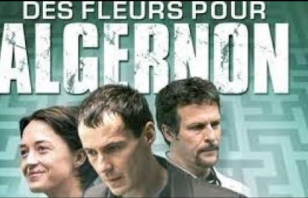 Des Fleurs pour Algernon - Film Complet