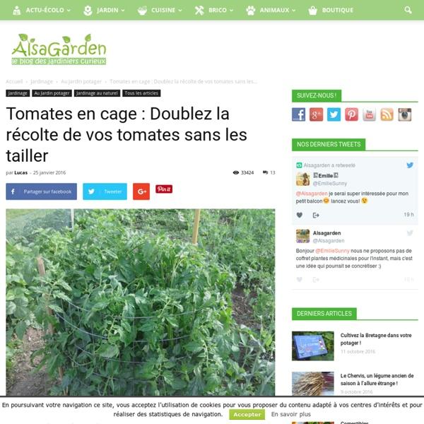 Tomates en cage : Doublez la récolte de vos tomates sans les tailler