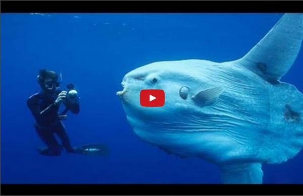 Amazing Creatures of the Deep Ocean HD