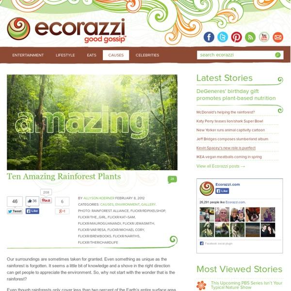 Ten Amazing Rainforest Plants