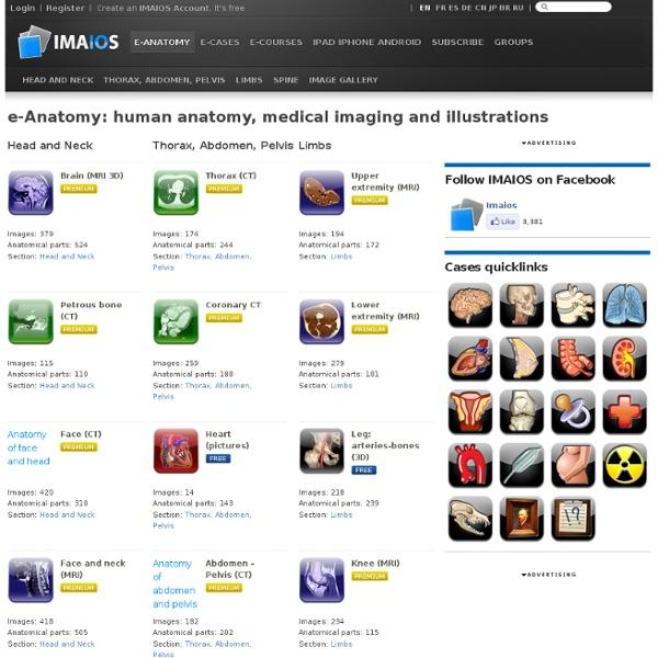 Human anatomy: medical imaging and illustrations