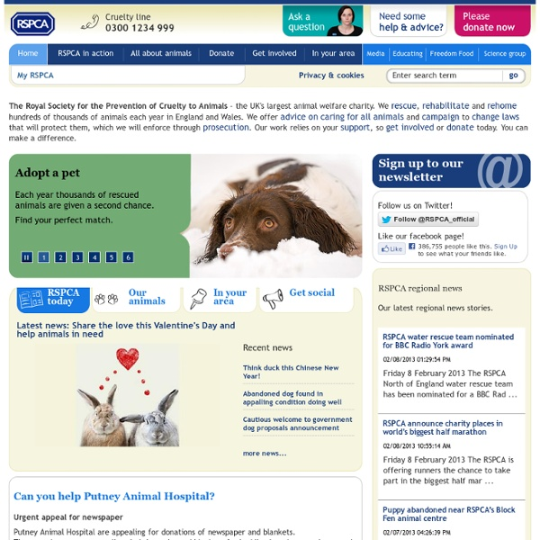 Animal Charity - Rescue Dogs, Cats, Pets, Horses - Prevent Cruelty - rspca.org.uk