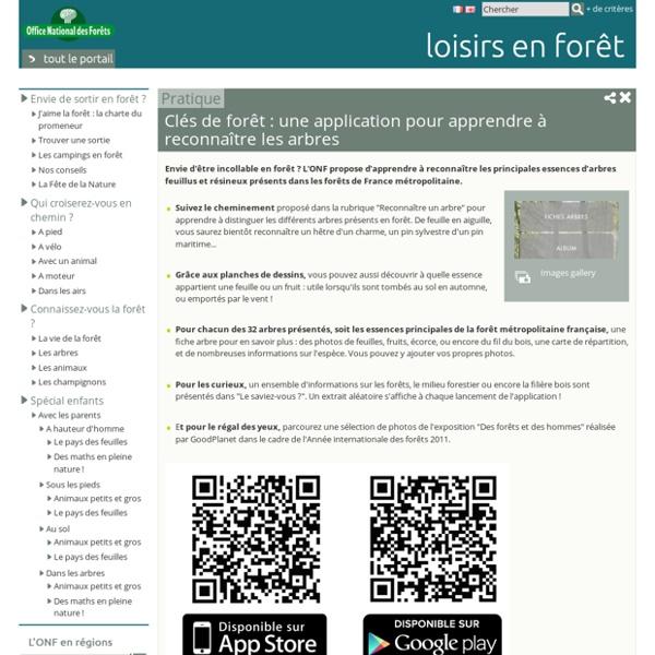 Clés de forêt : une application pour apprendre à reconnaître les arbres