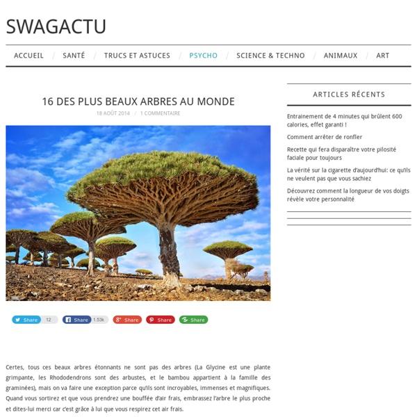 Arbre : les 16 des plus beaux arbres au monde