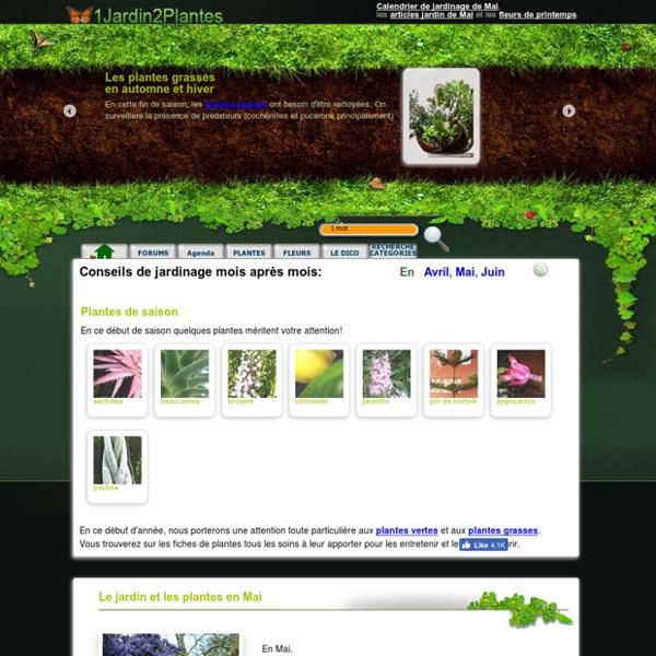 857 plantes au jardin sur 1 jardin 2 plantes info for Au jardin info