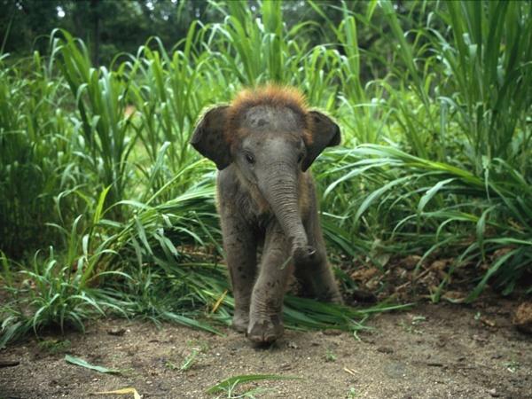 Baby-asian-elephant_227_990x742.jpg (JPEG Image, 989x742 pixels) - Scaled (70%)