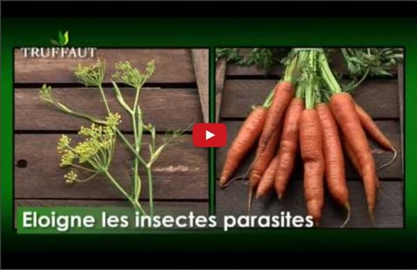 Les bonnes associations de plantes au jardin - Jardineries Truffaut TV