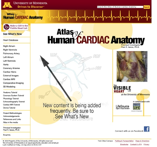 Atlas Of Human Cardiac Anatomy Pearltrees
