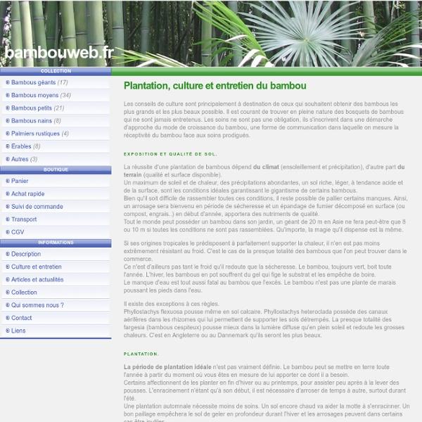 Culture du bambou