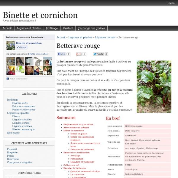 Betterave rouge : Semis, culture et récolte au potager bio