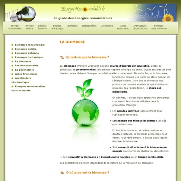 Biomasse : tout connaître sur l'énergie de la biomasse