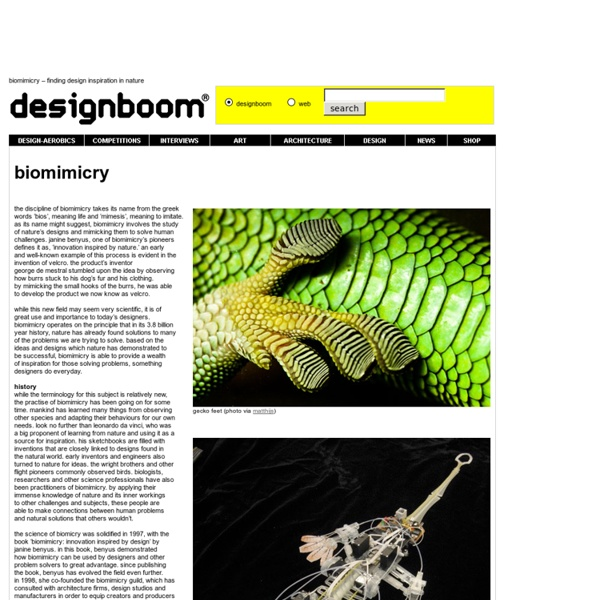 Biomimicry – finding design inspiration in nature