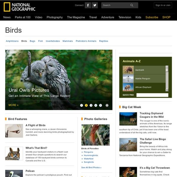 Birds, Bird Pictures, Wild Birds