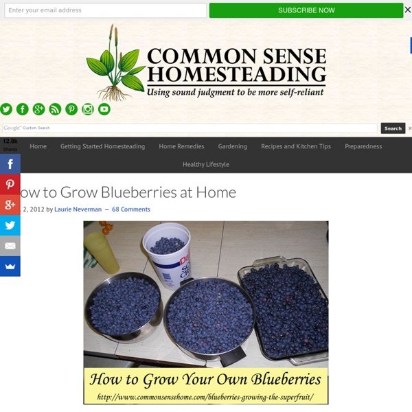 How to Grow Blueberries - Growing the Superfruit