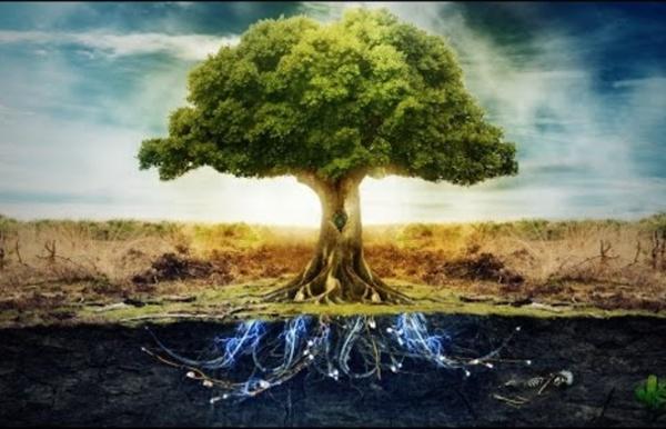 Claude Bourguignon - Microbiologie des sols