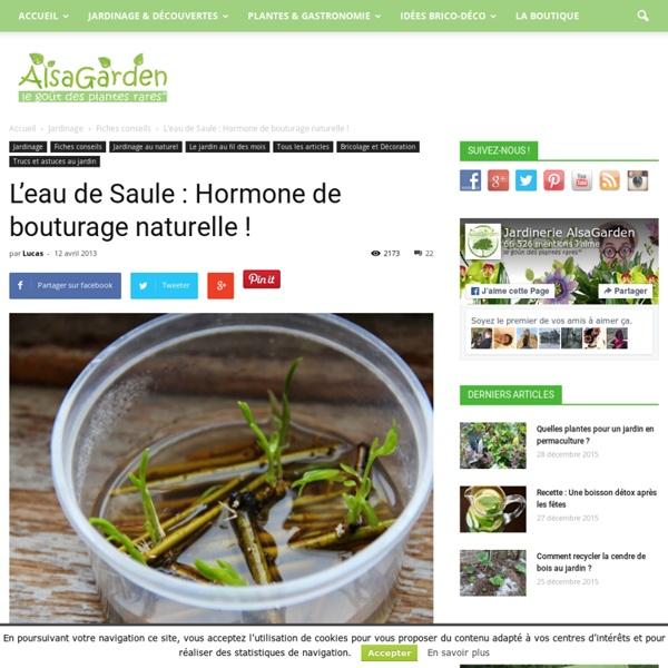 L eau de saule hormone de bouturage naturelle pearltrees - Hormone de bouturage ...
