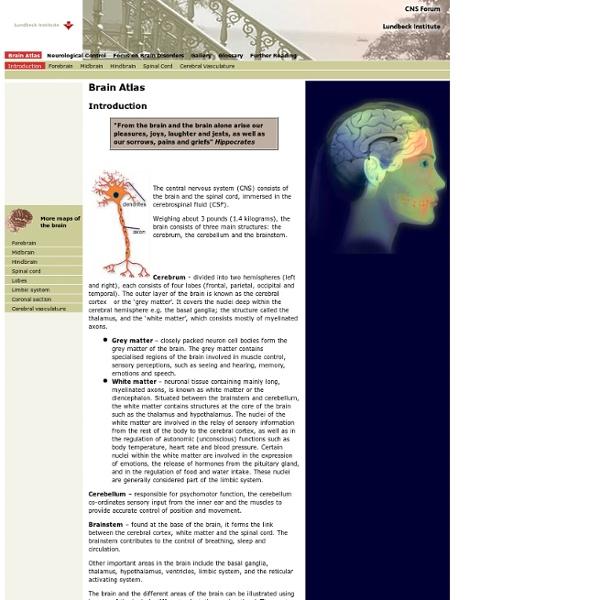 Brain Atlas - Introduction