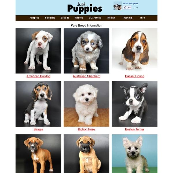 Breed Info - JustPuppies.net