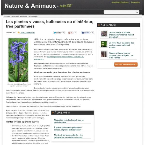 Les plantes vivaces, bulbeuses ou d'intérieur, très parfumées