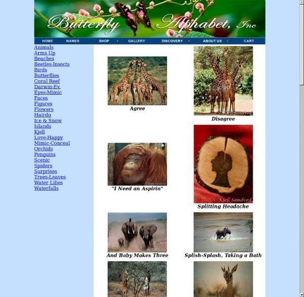 Butterfly Alphabet - Bilder på djur och natur, alfabet