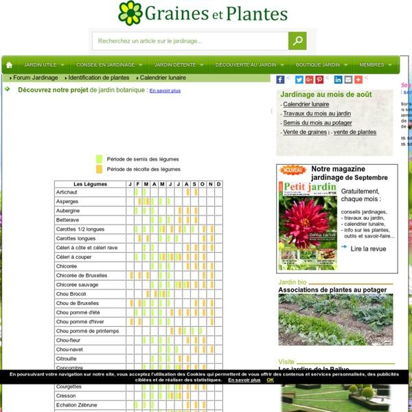 Calendrier des semis de légumes
