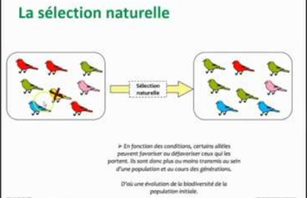 Capsule TS - Les mécanismes de l'évolution