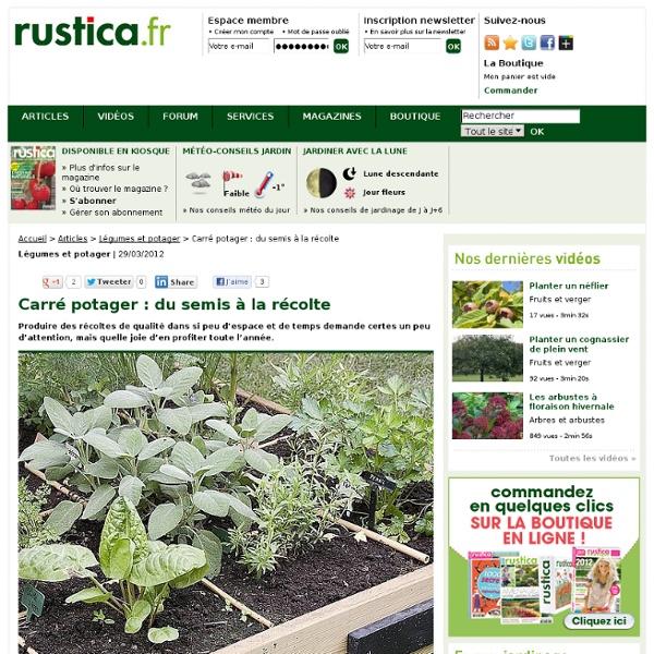 Carré potager : du semis à la récolte