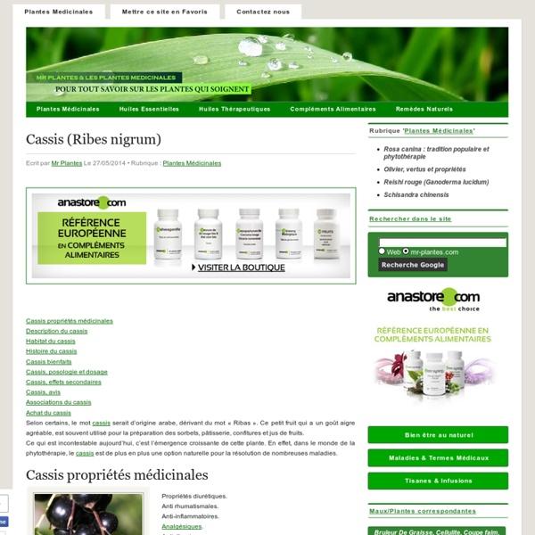 Cassis (Ribes nigrum)