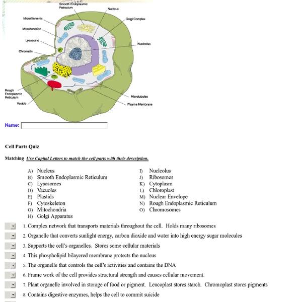 Cell Parts Quiz