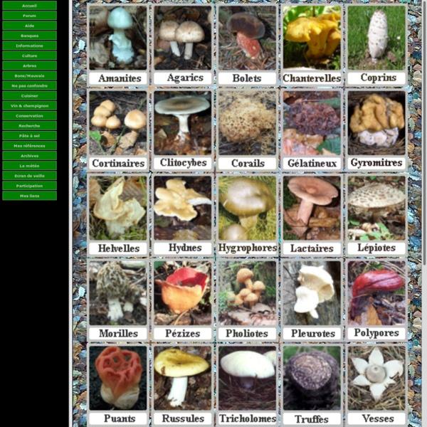 Les champignons agaric, cèpe, bolet, amanite, morille, girolle