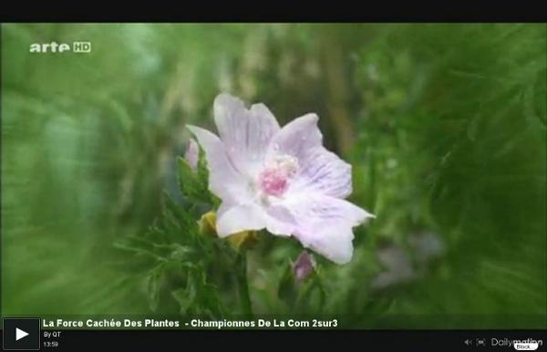 La Force Cachée Des Plantes - Championnes De La Com 2sur3 - une vidéo Expression Libre