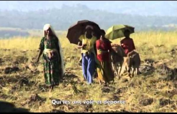 Nouvelle Colonisation - Kolibri (Land grabbing, accaparement des terres)