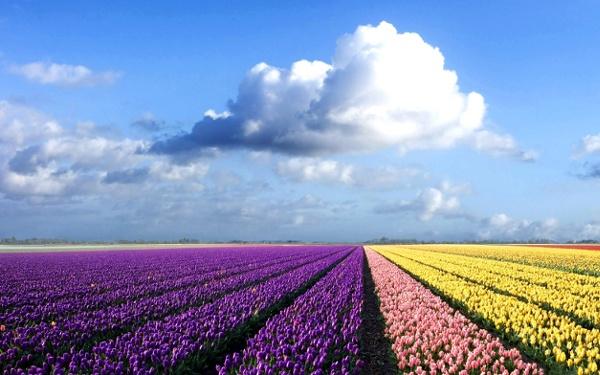 Colorful-flower-field_1920x1200_71912.jpg from mi9.com