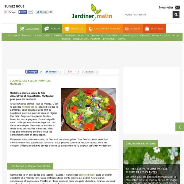 Fleurs comestibles à cultiver pour vos plats et salades