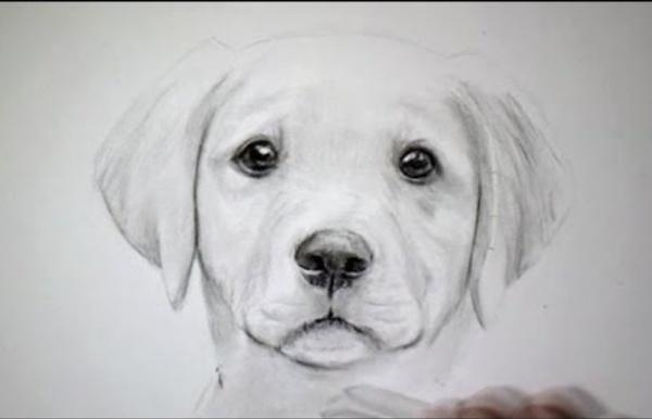 Comment dessiner un chien ld53 montrealeast - Dessin d un chien ...