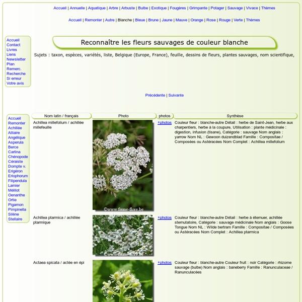 Comment s'appelle cette plante sauvage de COULEUR BLANCHE (photos, images, photographies) (fleurs, feuilles, fruits, photos, Europe)