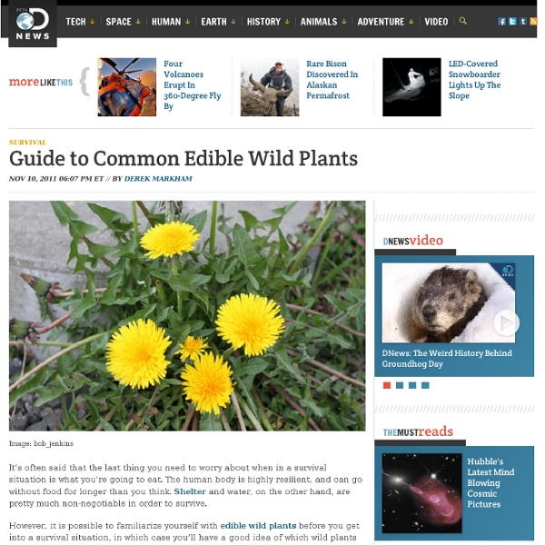 Guide to Common Edible Wild Plants