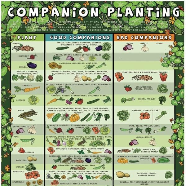Companion-planting-poster.jpg (696×962)