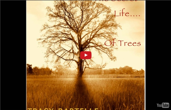 """THE SECRET LIFE OF TREES"" 75 mns de musique relaxante"