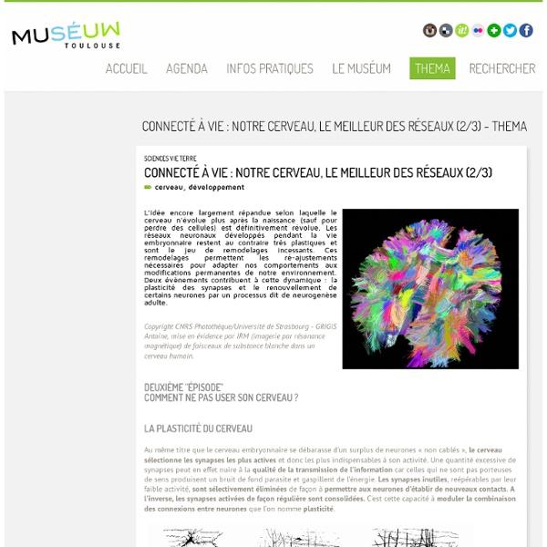 Connecté à vie : notre cerveau, le meilleur des réseaux (2/3) - Thema - Museum
